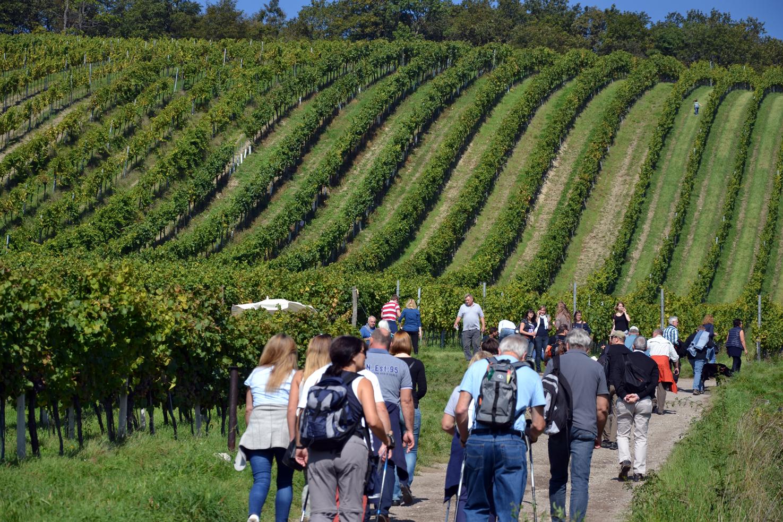 Wiener Weinwandertag (Neustift bis Nussdorf)