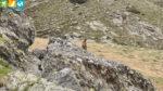 Murmeltier am Wanderweg 8 zum Plattensee (Reinswald, Südtirol, Italien)
