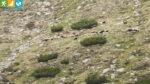 Ziegen am Wanderweg 8 zum Plattensee (Reinswald, Südtirol, Italien)