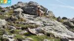 Oscar in der felsigen Passage auf dem Höhenrundweg 9B (Sarntal, Südtirol, Italien)