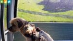 Oscar in der Kabinenbahn auf den Pichlberg (Sarntal, Südtirol, Italien)