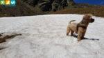 Oscar in einem Schneefeld am Wanderweg 7 zum Latzfonser Kreuz (Sarntal, Südtirol, Italien)